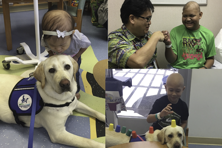 Collage photo of Winnie (Kapiolani Hospital's facility dog) and 2-yr-old, Katy, and Dr. Wade Kyono and 15-yr-old Luke, and 8-yr-old Tavin playing with Winnie