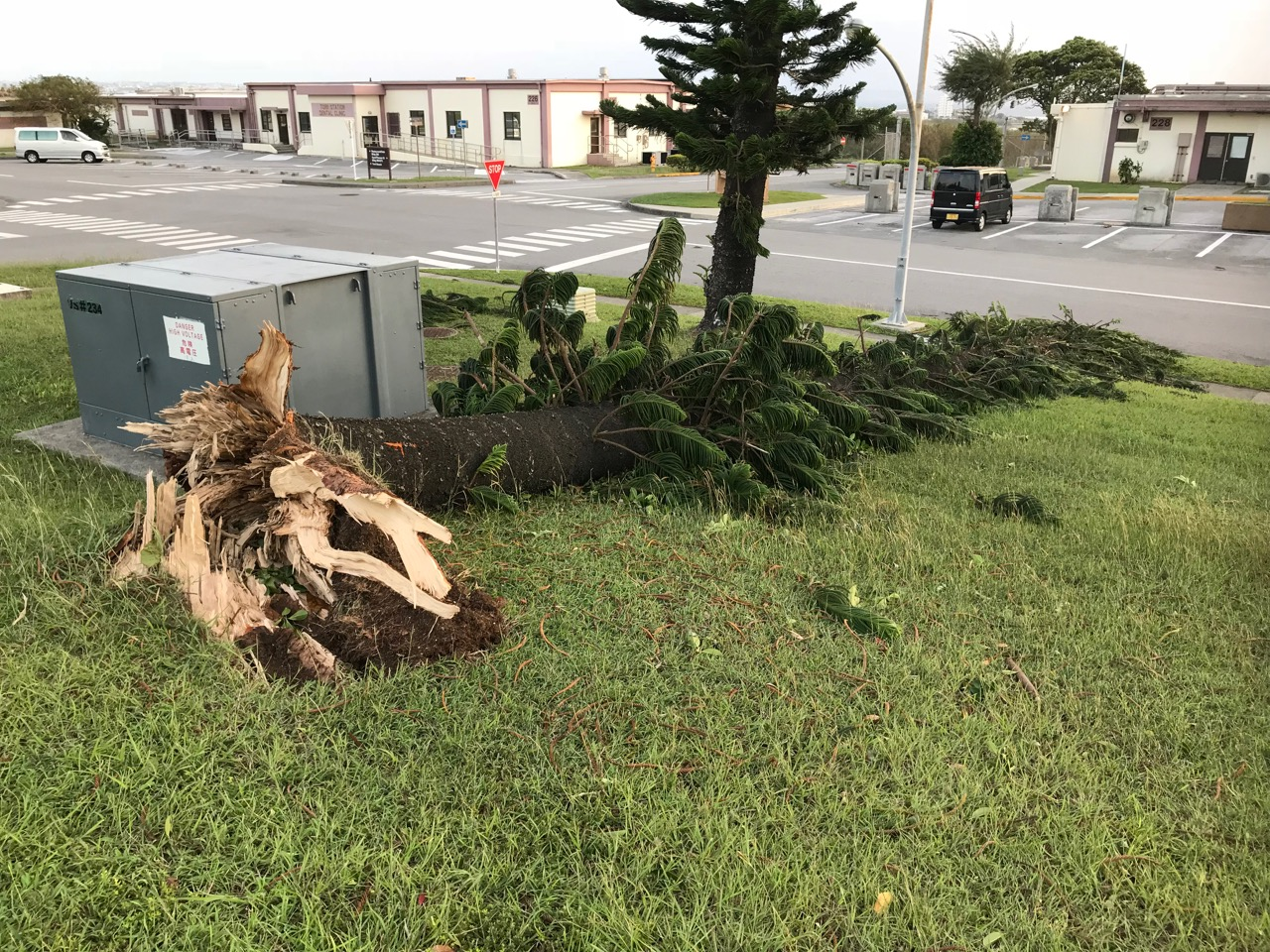 This tree at U.S. Army Garrison Okinawa in Sobe, Yomitan, also known as Torii Station, fell victim to Typhoon Saola in late October. Torii Station is the main Army installation in Okinawa. (Photo by Colin Sewake)