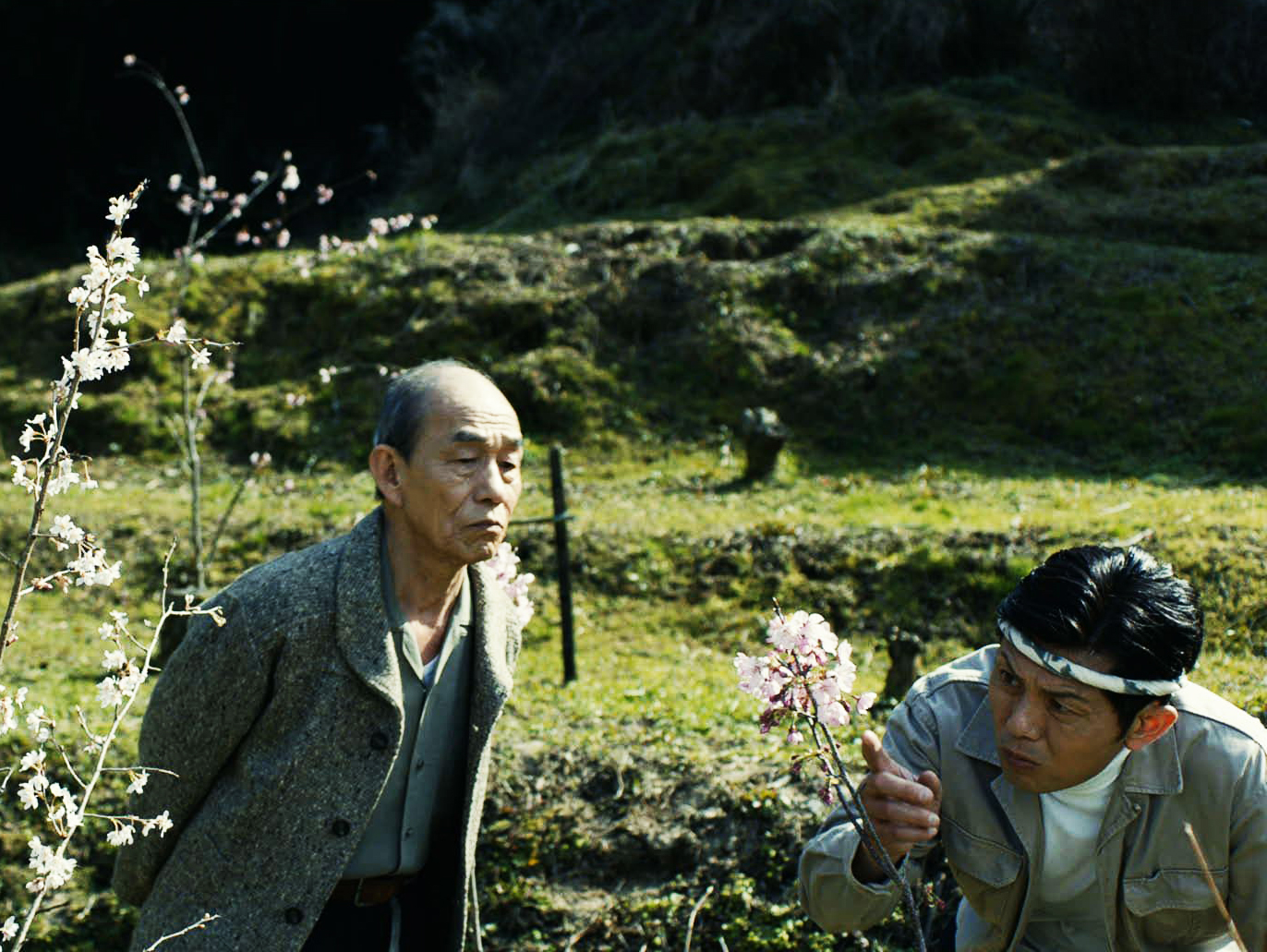 "Photo from ""Yoko the Cherry Blossom"""