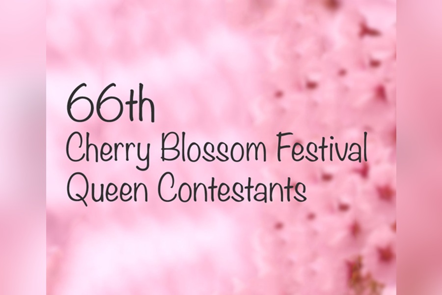 Graphic for the 66th Cherry Blossom Festival Contestants