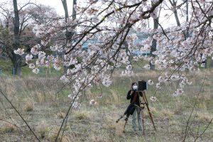 Ai Iwane working with the Kodak Cirkut camera in Fukushima. (Photo by Haruo Imazumi)