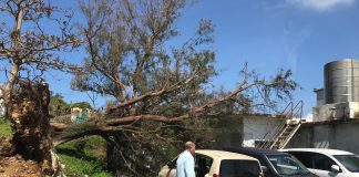 Photo of a fallen tree on cars and a nearby house/building caused by typhoon Trami