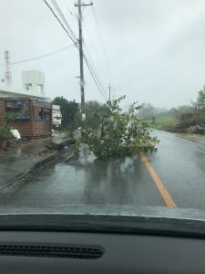 Photo of a fallen tree on the road caused by Typhoon Trami