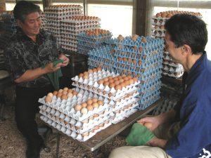 Alan Wong and Tadaaki Hachisu talk story while cleaning Tadaaki's organically raised eggs.