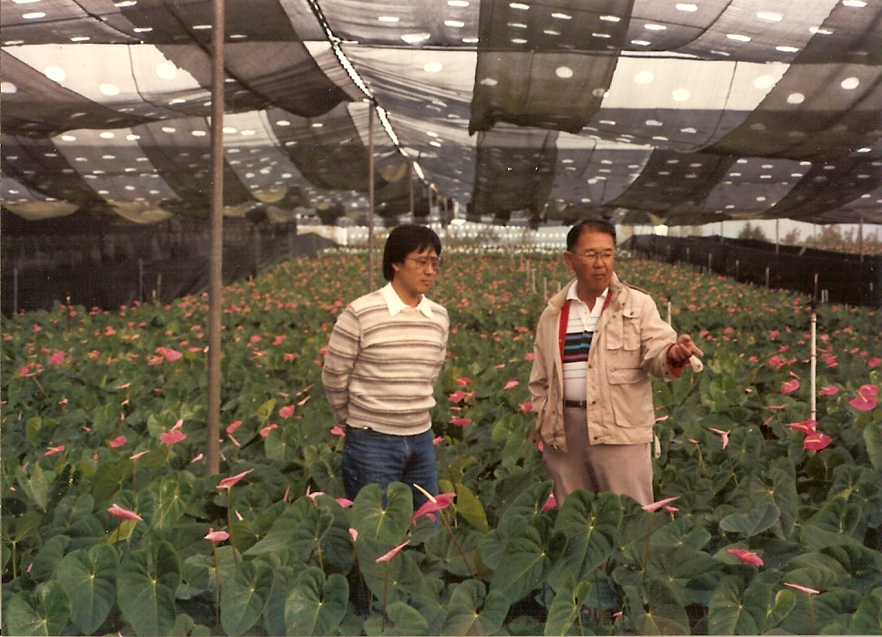 A 1992 photo of Eric Tanouye with his father Harold in one of Green Point Nurseries' anthurium hothouses.