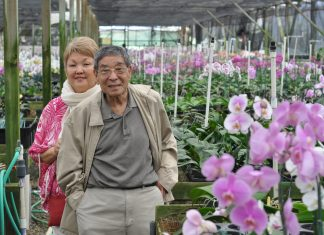 Howard and June Nakamoto in a hothouse of orchids. (Photo courtesy Nakamoto family)