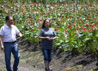 Eric Tanouye and longtime Green Point Nurseries employee Estelle Navalta discuss their work plan for the day. During the 2009 economic recession, Tanouye and his fellow Big Island flower growers came up with a plan to lift the spirits of their entire island community. (Photo courtesy Eric Tanouye)