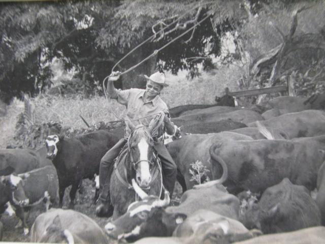 Tom Onaka roping cattle. (Photo by Bob Fewell)