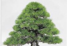 Photo of a bonsai display