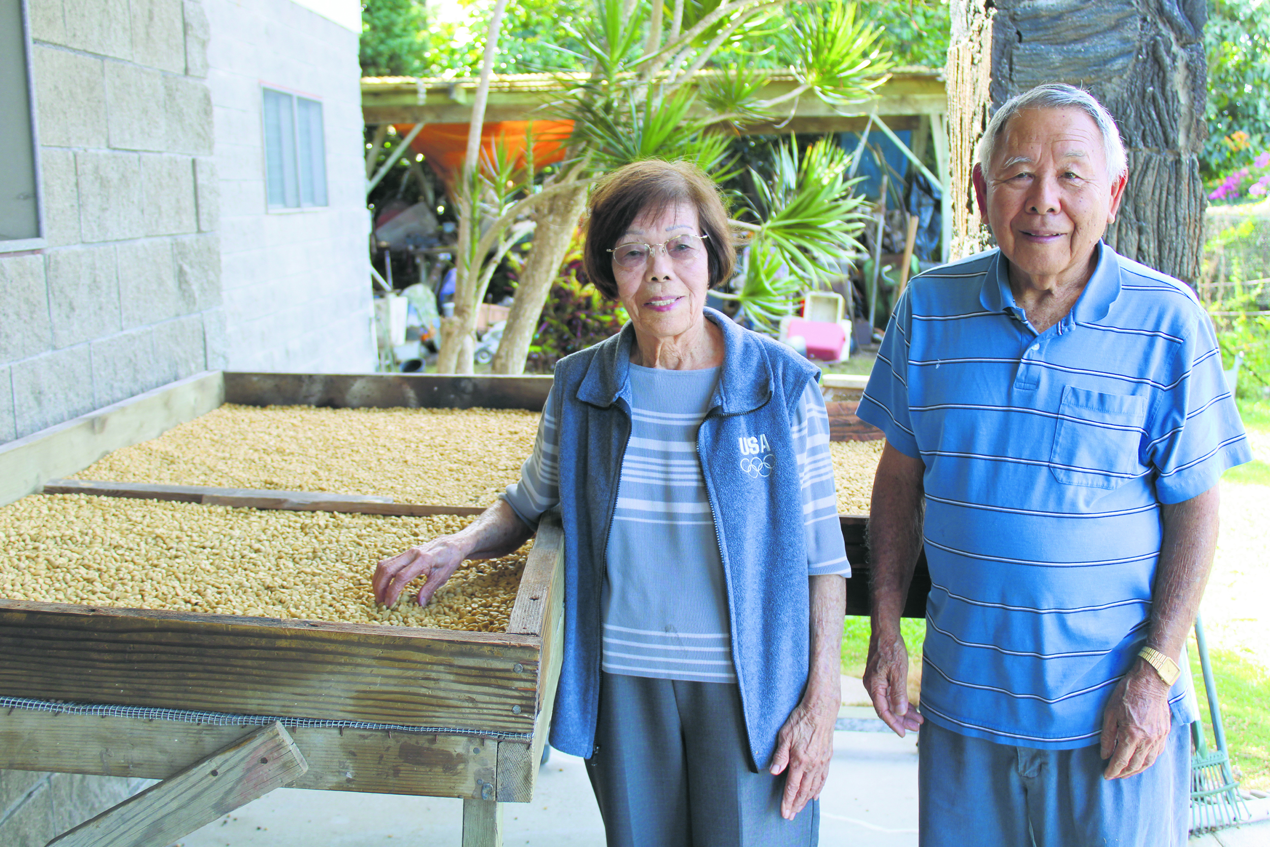 At age 87, Takeo and Shigeko Nakasone remain active, working on their mini farm in Hölualoa in North Kona. They are pictured here checking on the coffee parchment air-drying on the table. (Color photos by Dan Nakasone)