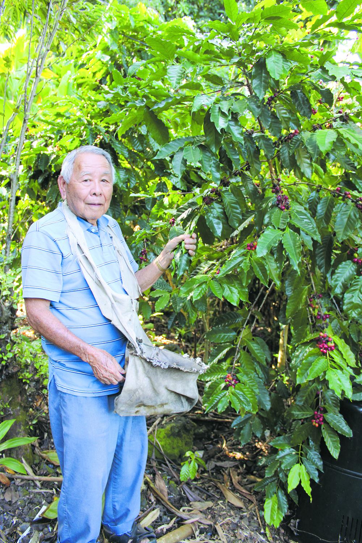 Takeo Nakasone picking coffee cherries.