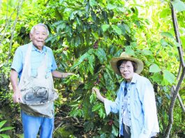 Takeo and Shigeko Nakasone picking coffee cherries together